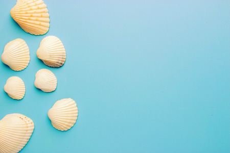 Seashells on blue background. vacation and travel concept
