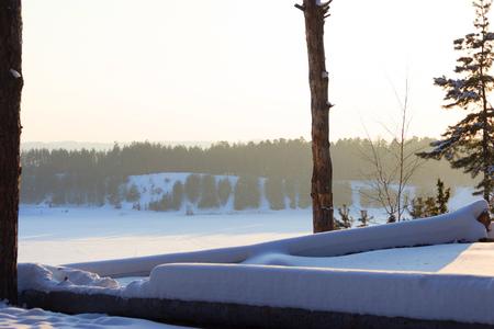 winter forest after snow bizzard. felt trees