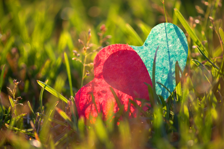 two Hearts lying on green grass in warm sunlight