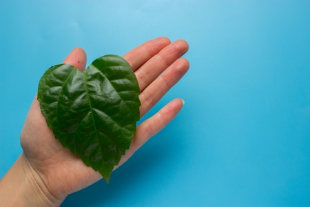 Green heart shape leaf in womans hands. eco concept Reklamní fotografie