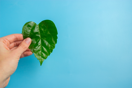Green heart shape leaf in womans hands. eco concept Stock Photo