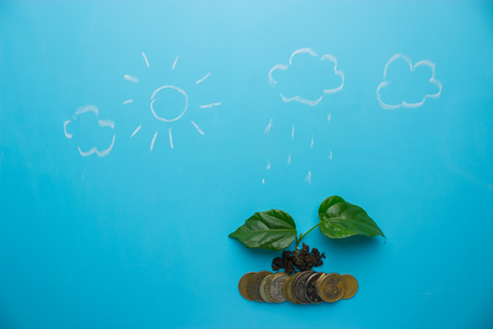money growing concept. money and green sprout on blue background