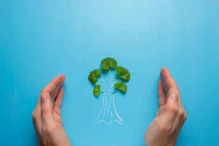 female hand holding tree sketch. eco concept Banco de Imagens - 105346450