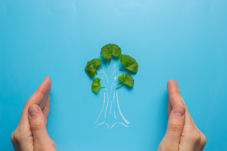 female hand holding tree sketch. eco concept Stock Photo