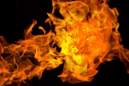 lynx in dander concept. wild nature in danger concept