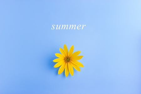 single yellow flower on blue background. summer concept