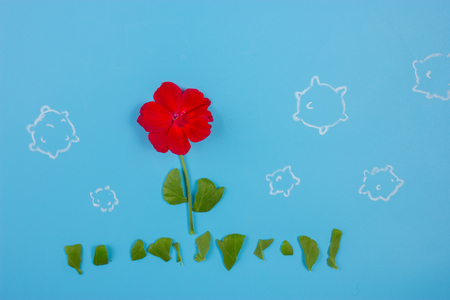 red flower on blue background. allergy concept