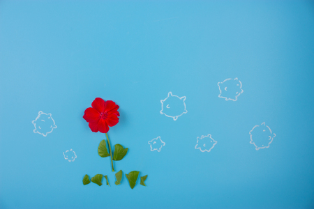 red flower on blue background. Stock Photo
