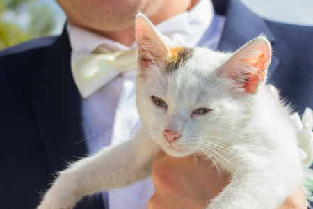groom holding cute little white kitten. close up Banque d'images