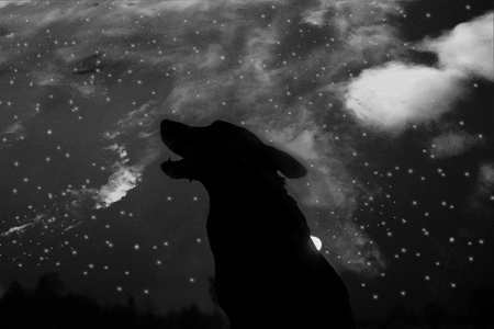 howling wolf silhuette over sky background. halloween Stockfoto