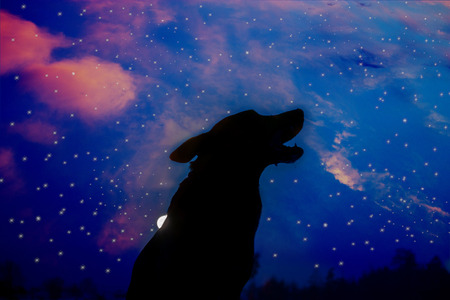howling wolf silhuette over sky background. halloween