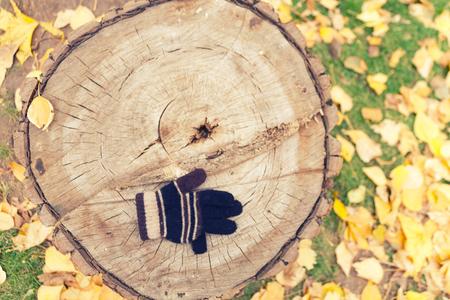 glove on autumn leaves background. lost glove Foto de archivo