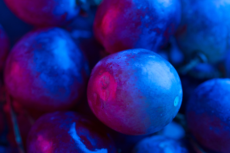 grape close up in neon red and blue light