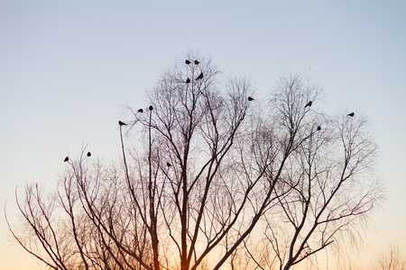 silhouette of tree and birds over sunset sky Stock Photo