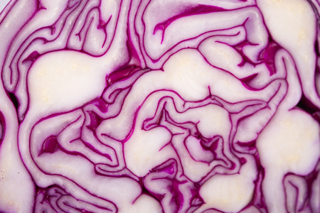 Raw Shredded Purple Cabbage on blue background Stock Photo