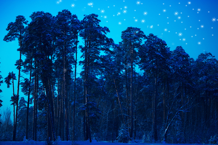 night in winter forest. pine trees Imagens