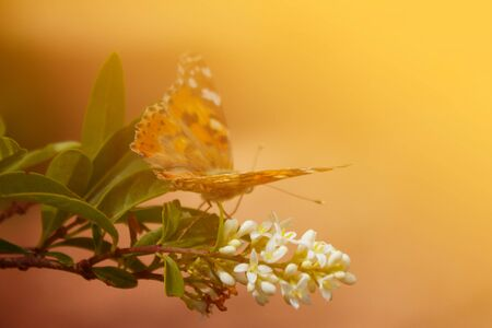 Butterfly on tree branch with copy space