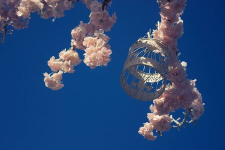Branch of tree with pink flowers on blue background