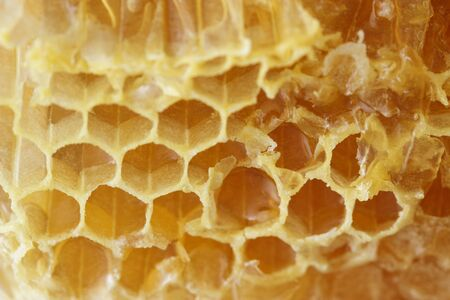 Close up of honey combs. Toned image