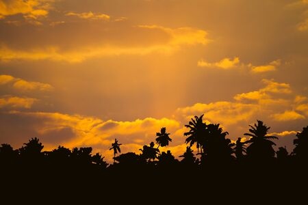 Beautiful cloudscape with palm trees silhouettes