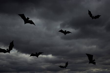 Bats on the stormy sky background