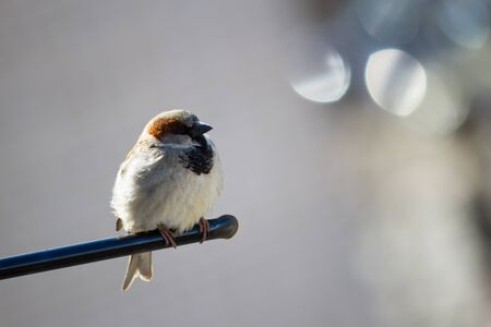 Small brown sparrow sitting on metal stick