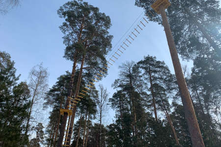 Rope park in pine treeforest. High above the earth Archivio Fotografico