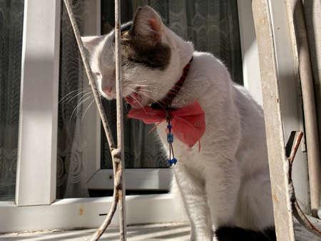 Female cat sitting on a window. Istanbul city