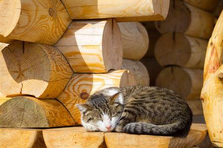 Cute cat sleeping on wooden stair