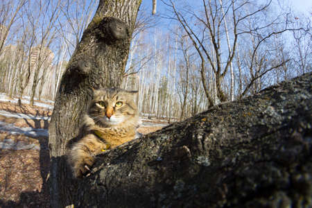 Funny cat on a tree. Captured with fish eye lens