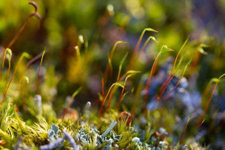 Macro. sapling moss plant on the tree Archivio Fotografico