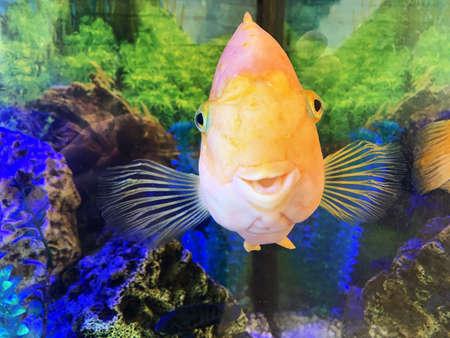 Goldfish in aquarium with decorations