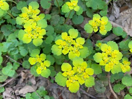 green leaf background. Eco background 版權商用圖片