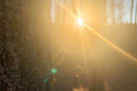 Blurred background with sunshine in a forest