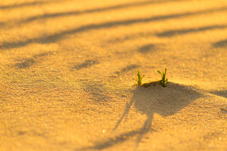 Little sprouts in sand. Hope concept