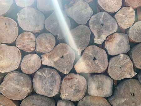 Wood logs in a big pile. background