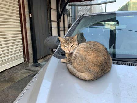 Homeless cat sleeping on a car. Istanbul city 版權商用圖片