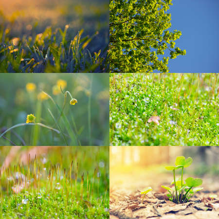 Collection of eco images with nature