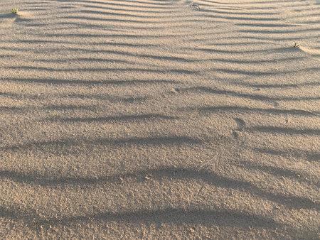 Texture Sand Dune Desert. Sunset time Zdjęcie Seryjne
