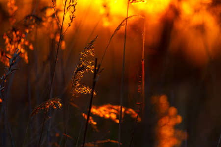 Abstraction with plants in orange sunlight