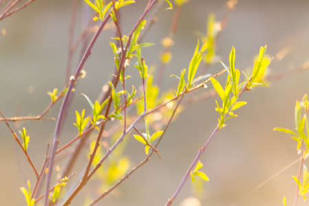 Young foliage on tree branch. Spring