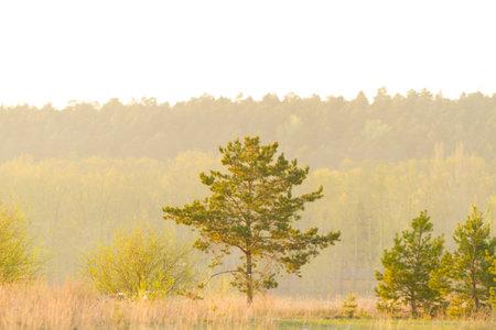 landscape with single pine tree Zdjęcie Seryjne