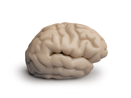 human brain on white background isolated side view