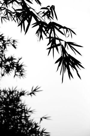 Bamboo Stock Photo - 6107664