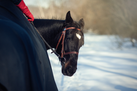 A horse with a rider looks back at the background of the winter landscape Stock Photo