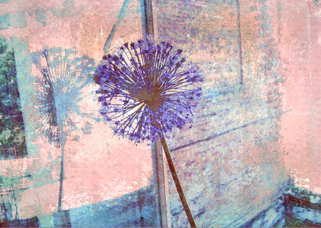 allium flower: Blue allium flower reflected in a window pane. Floral background. Old texture. Image for the interior, as part of wall decorations. Stock Photo