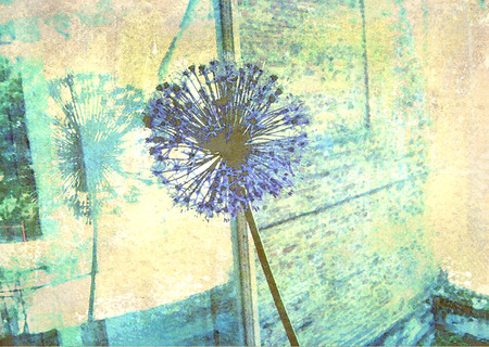 window pane: Blue allium flower reflected in a window pane. Floral background. Old texture. Image for the interior, as part of wall decorations. Stock Photo