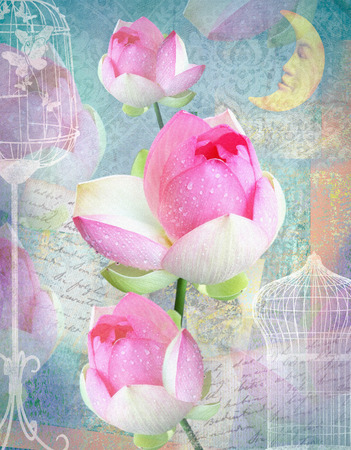 happening: Postcard flower. Congratulations card with peonies, cells and moon. Beautiful pink flower. Can be used as greeting card, invitation for wedding, birthday and other holiday happening. Blue background.