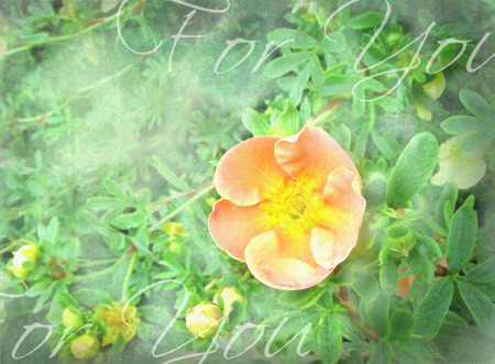happening: Orange flower with green plants background. Seasonal floral design. Meadow summer fantasy. Can be used as gift, greeting card, invitation for wedding, birthday, other holiday happening.