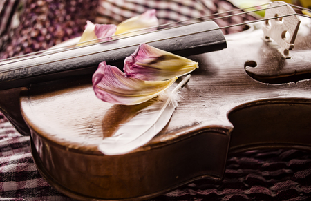 stringed: Still life with vintage violin and petals. Closeup of old wooden violin. Stringed music instrument on abstract background. Stock Photo